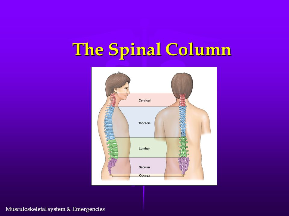 Musculoskeletal system & Emergencies The Spinal Column