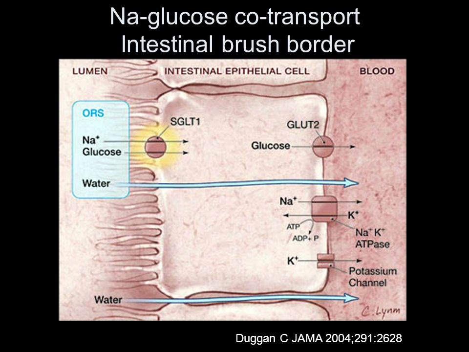 Na-glucose co-transport Intestinal brush border Duggan C JAMA 2004;291:2628
