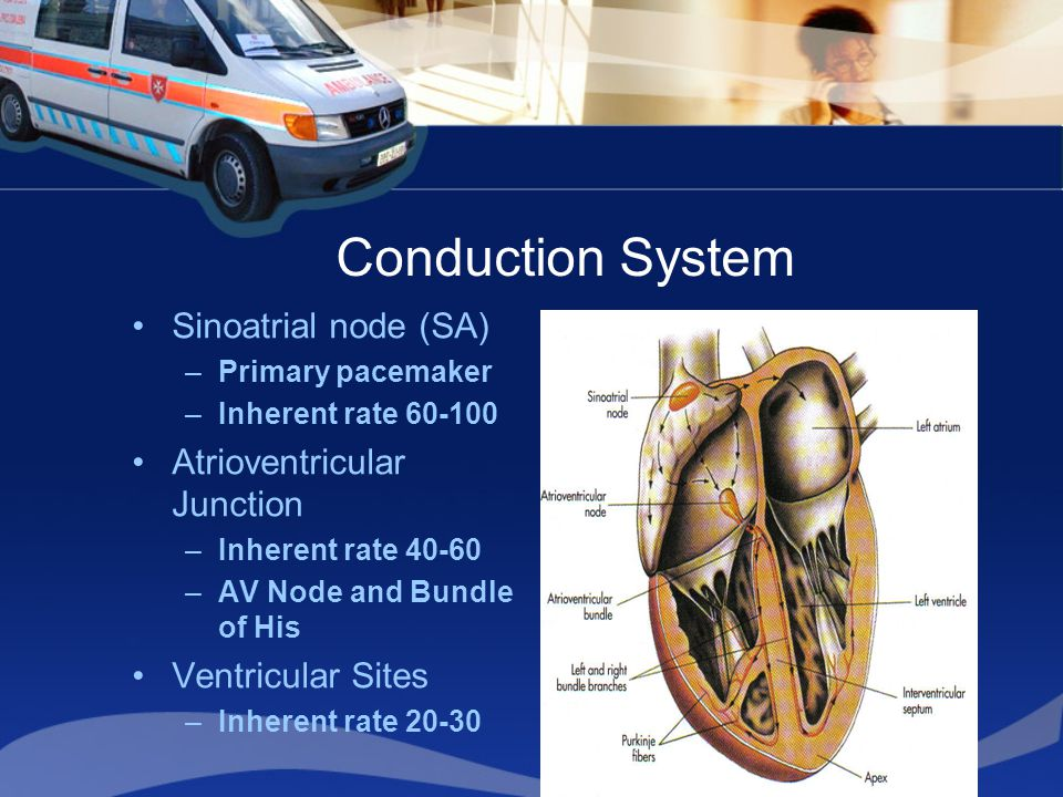Conduction System Sinoatrial node (SA) –Primary pacemaker –Inherent rate 60-100 Atrioventricular Junction –Inherent rate 40-60 –AV Node and Bundle of