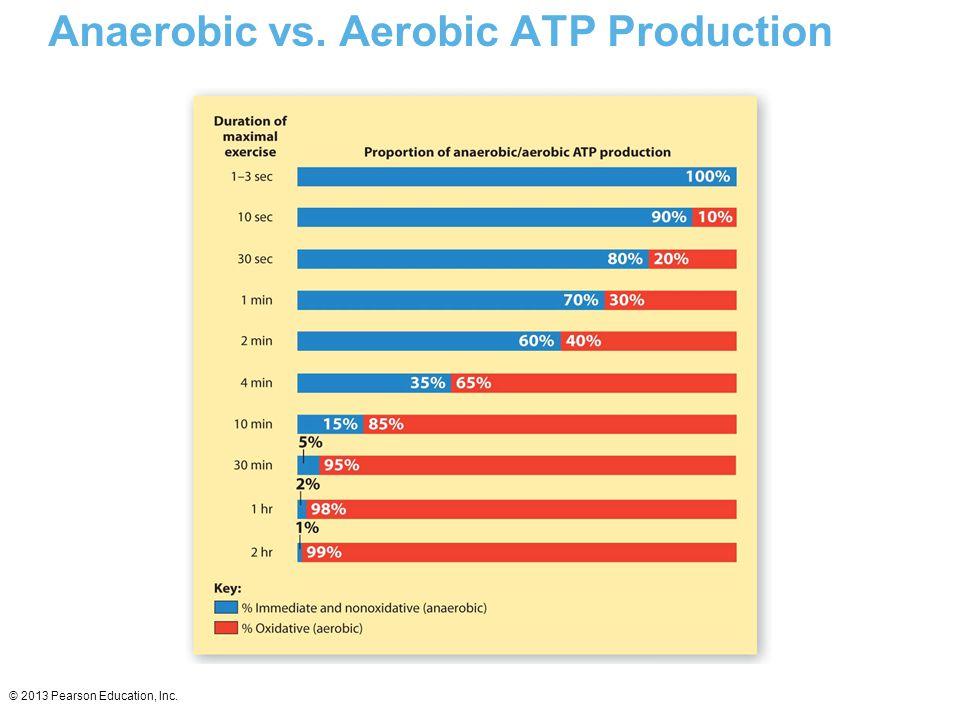 © 2013 Pearson Education, Inc. Anaerobic vs. Aerobic ATP Production