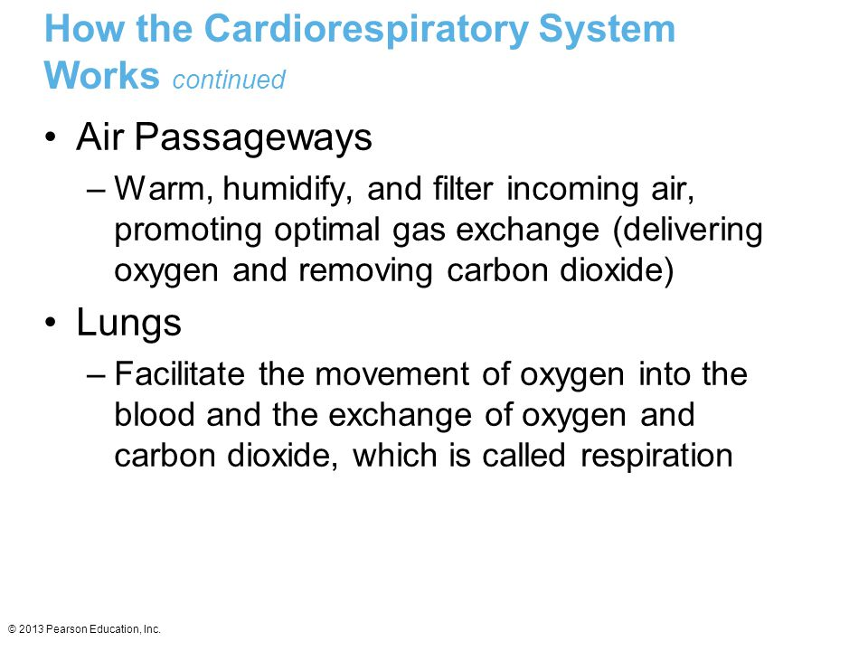 © 2013 Pearson Education, Inc. How the Cardiorespiratory System Works continued Air Passageways –Warm, humidify, and filter incoming air, promoting op