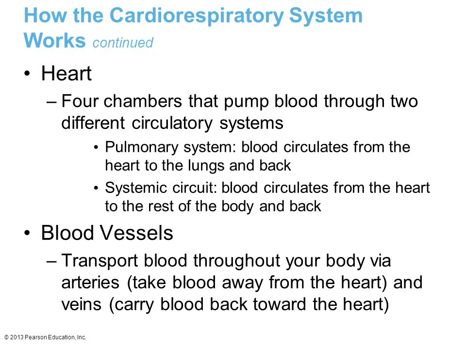 © 2013 Pearson Education, Inc. How the Cardiorespiratory System Works continued Heart –Four chambers that pump blood through two different circulatory