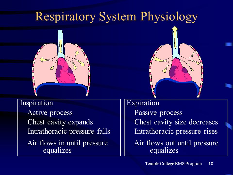 Temple College EMS Program10 Respiratory System Physiology Inspiration Active process Chest cavity expands Intrathoracic pressure falls Air flows in until pressure equalizes Expiration Passive process Chest cavity size decreases Intrathoracic pressure rises Air flows out until pressure equalizes