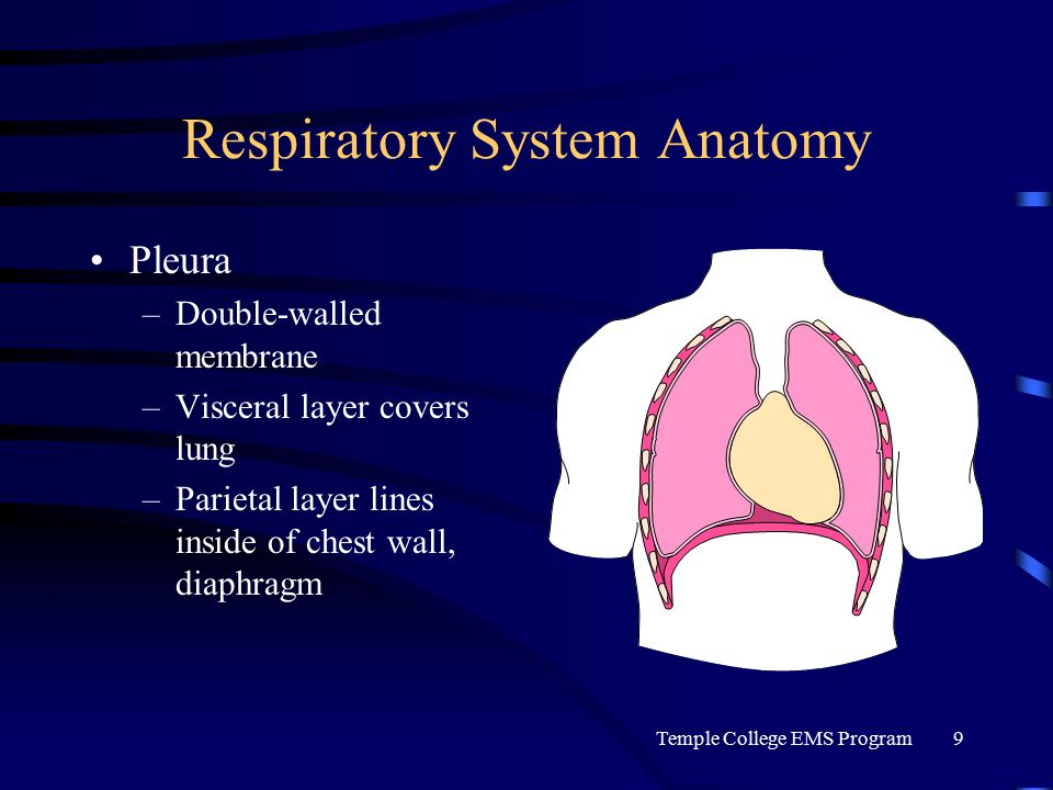 Temple College EMS Program9 Respiratory System Anatomy Pleura –Double-walled membrane –Visceral layer covers lung –Parietal layer lines inside of chest wall, diaphragm