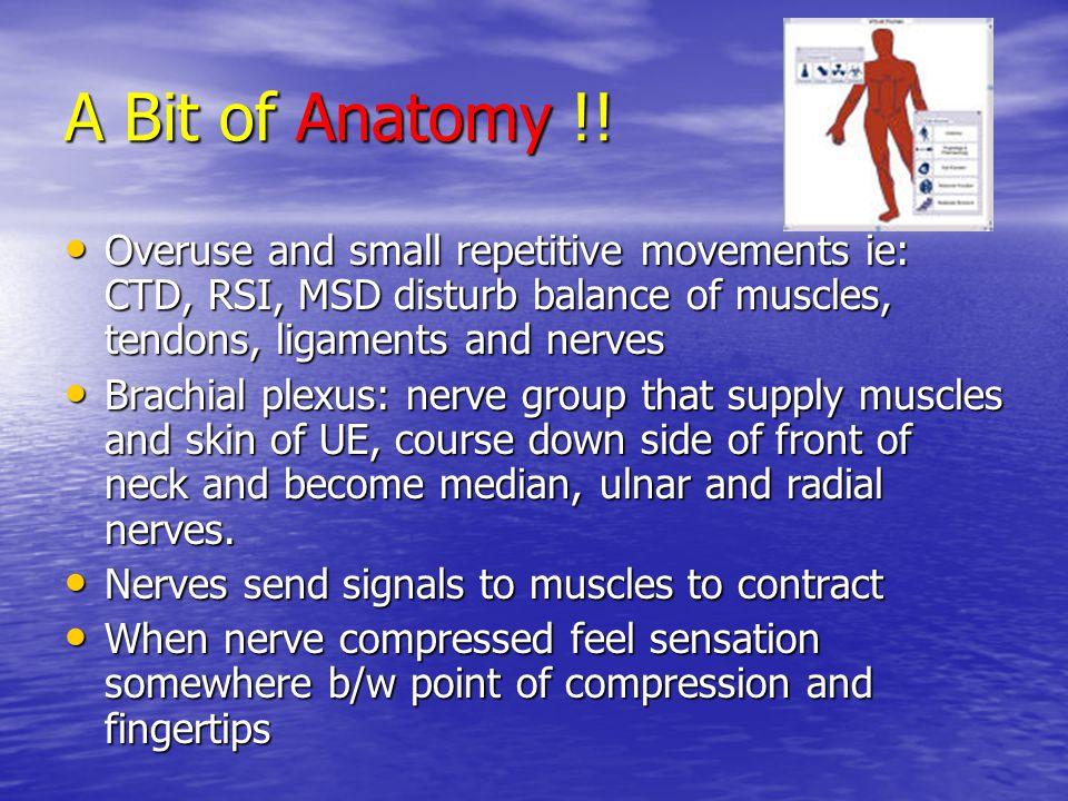 A Bit of Anatomy Anatomy !.