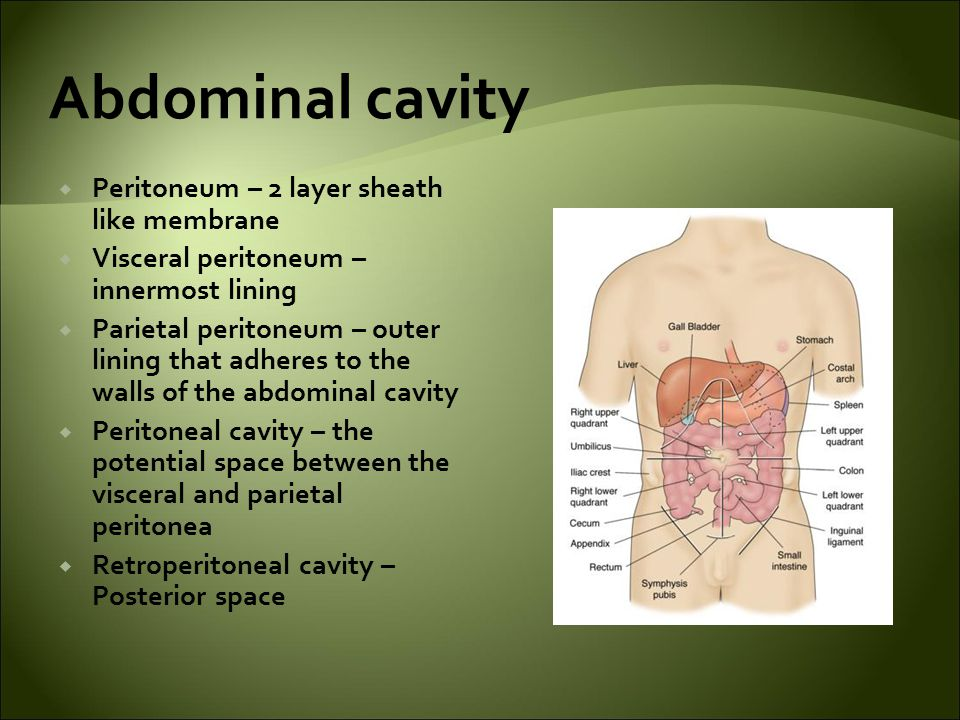 Abdominal cavity  Peritoneum – 2 layer sheath like membrane  Visceral peritoneum – innermost lining  Parietal peritoneum – outer lining that adheres to the walls of the abdominal cavity  Peritoneal cavity – the potential space between the visceral and parietal peritonea  Retroperitoneal cavity – Posterior space