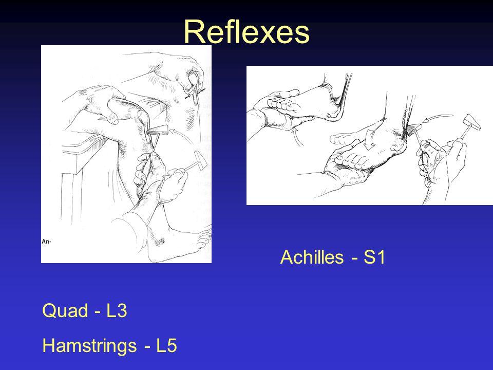 Reflexes Quad - L3 Hamstrings - L5 Achilles - S1