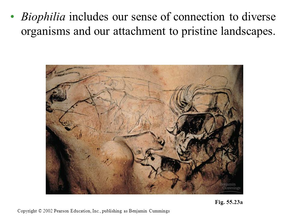 Biophilia includes our sense of connection to diverse organisms and our attachment to pristine landscapes. Copyright © 2002 Pearson Education, Inc., p