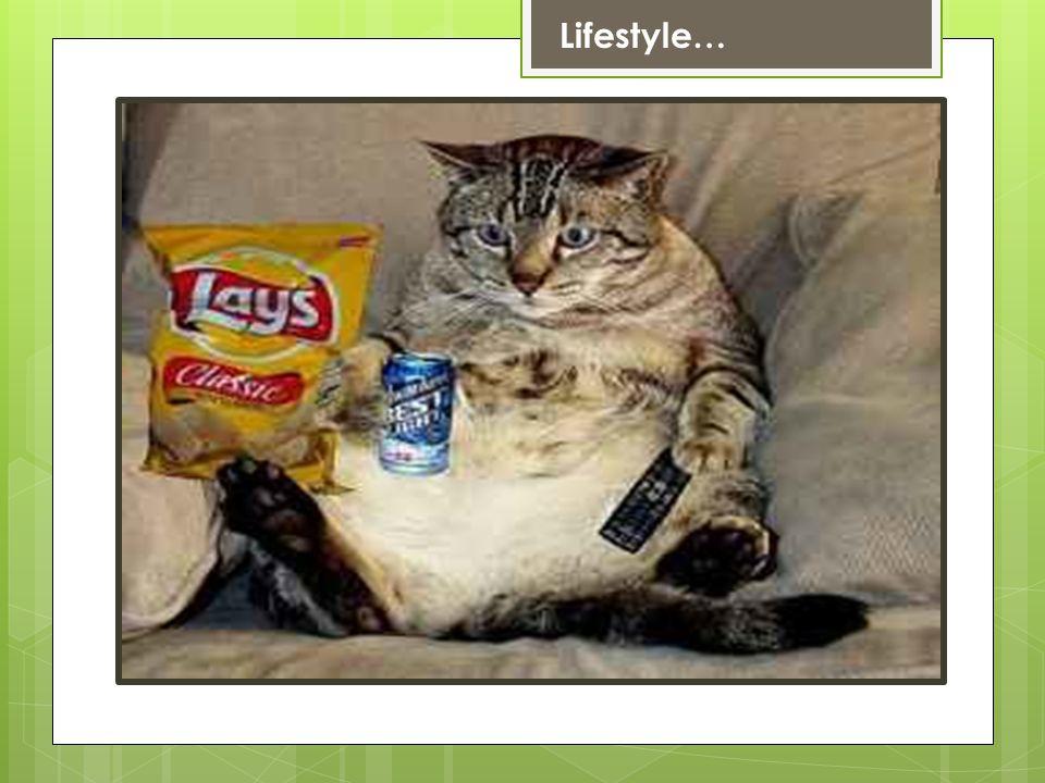 Lifestyle…