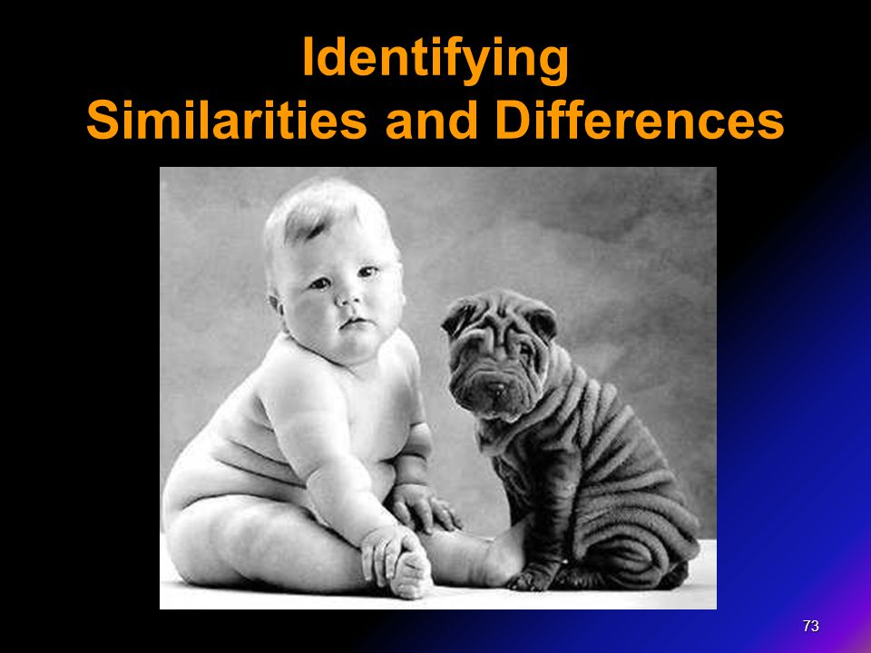 73 Identifying Similarities and Differences