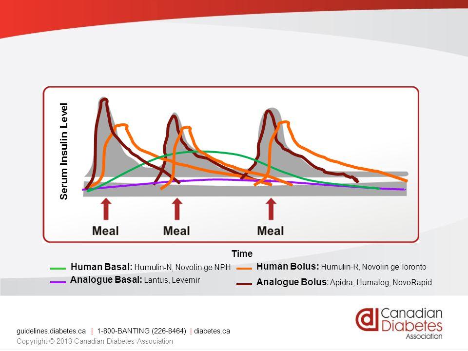Serum Insulin Level Time Analogue Bolus: Apidra, Humalog, NovoRapid Human Basal: Humulin-N, Novolin ge NPH Analogue Basal: Lantus, Levemir Human Bolus: Humulin-R, Novolin ge Toronto guidelines.diabetes.ca | 1-800-BANTING (226-8464) | diabetes.ca Copyright © 2013 Canadian Diabetes Association