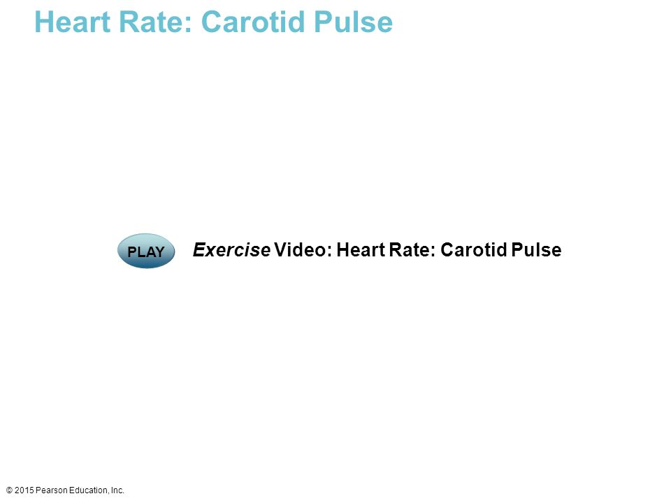 Heart Rate: Carotid Pulse © 2015 Pearson Education, Inc. Exercise Video: Heart Rate: Carotid Pulse PLAY