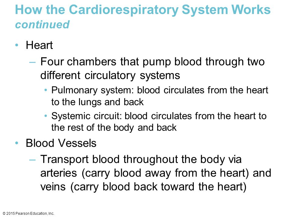 How the Cardiorespiratory System Works continued Heart –Four chambers that pump blood through two different circulatory systems Pulmonary system: bloo
