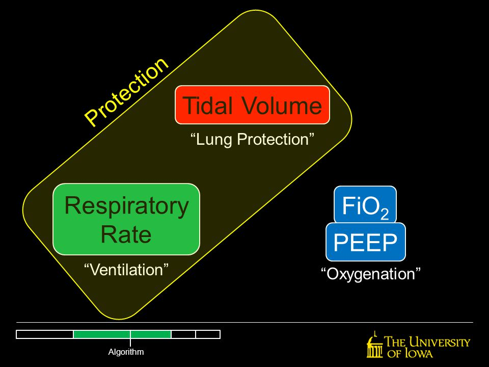 """Tidal Volume Respiratory Rate FiO 2 PEEP """"Lung Protection"""" """"Ventilation"""" """"Oxygenation"""" Protection Algorithm"""