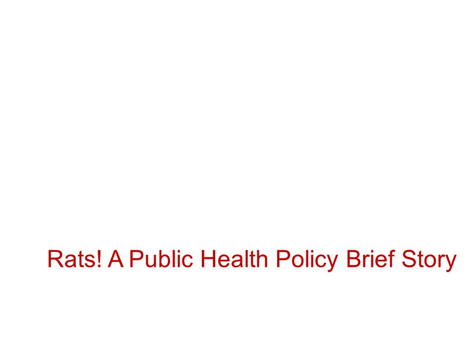 Rats! A Public Health Policy Brief Story