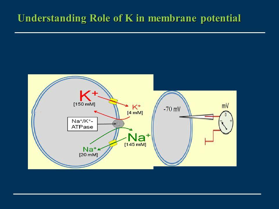 Understanding Role of K in membrane potential Understanding Role of K in membrane potential