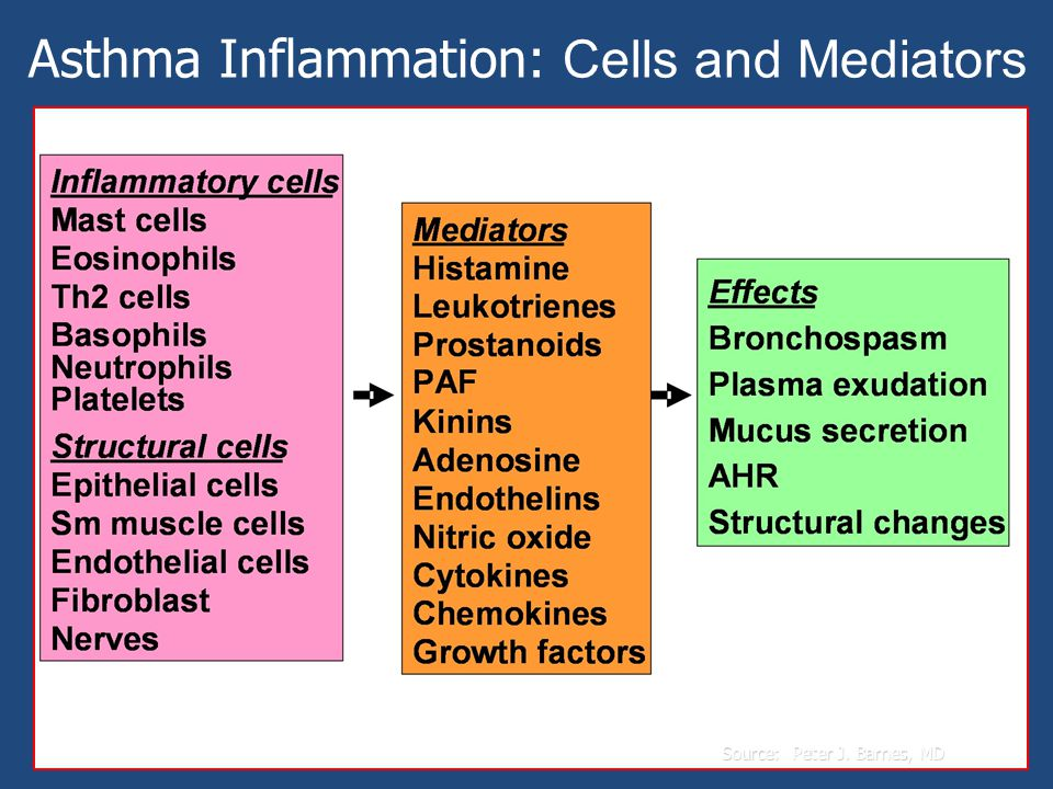 Source: Peter J. Barnes, MD Asthma Inflammation: Cells and Mediators