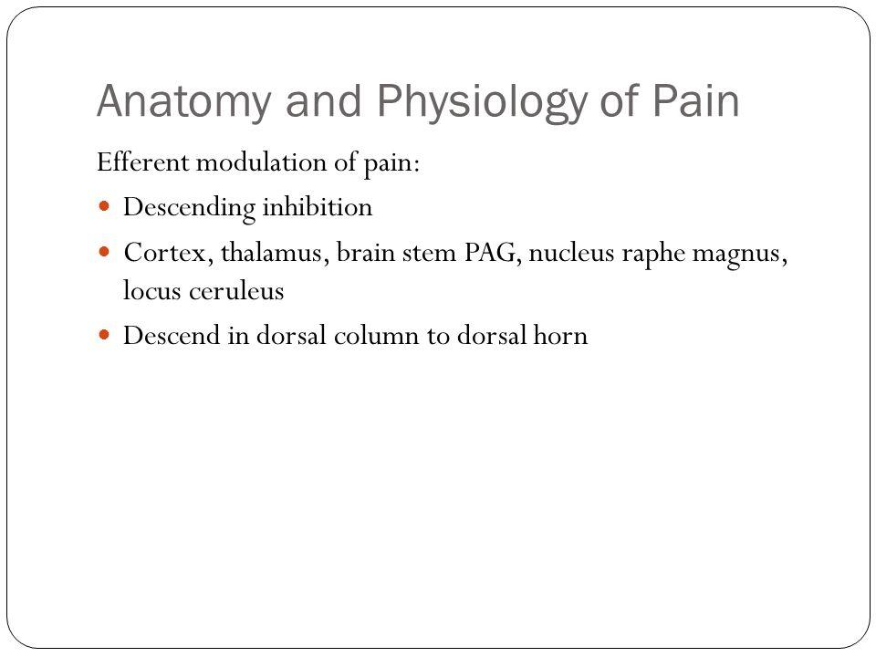 Anatomy and Physiology of Pain Efferent modulation of pain: Descending inhibition Cortex, thalamus, brain stem PAG, nucleus raphe magnus, locus cerule