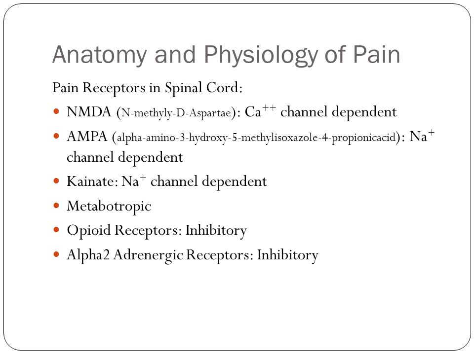 Anatomy and Physiology of Pain Pain Receptors in Spinal Cord: NMDA ( N-methyly-D-Aspartae ): Ca ++ channel dependent AMPA ( alpha-amino-3-hydroxy-5-me