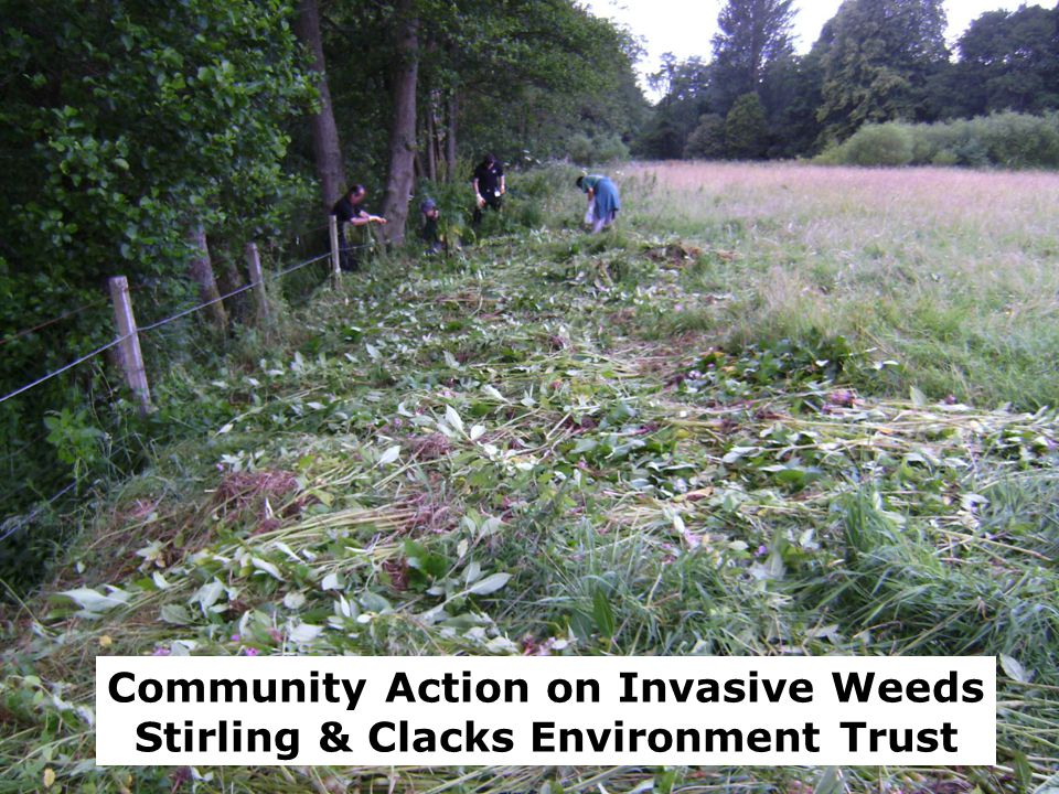 Community Action on Invasive Weeds Stirling & Clacks Environment Trust