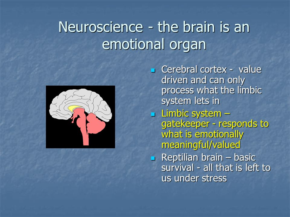Neuroscience - the brain is an emotional organ Cerebral cortex - value driven and can only process what the limbic system lets in Cerebral cortex - value driven and can only process what the limbic system lets in Limbic system – gatekeeper - responds to what is emotionally meaningful/valued Limbic system – gatekeeper - responds to what is emotionally meaningful/valued Reptilian brain – basic survival - all that is left to us under stress Reptilian brain – basic survival - all that is left to us under stress