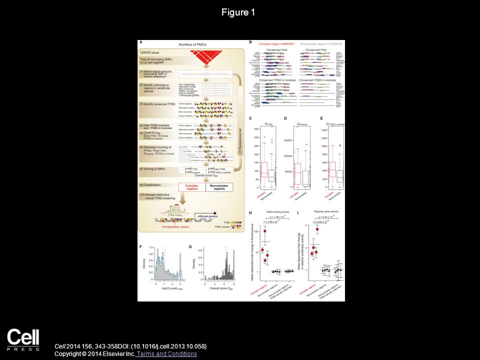 Figure 1 Cell 2014 156, 343-358DOI: (10.1016/j.cell.2013.10.058) Copyright © 2014 Elsevier Inc.