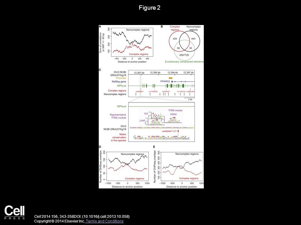 Figure 2 Cell 2014 156, 343-358DOI: (10.1016/j.cell.2013.10.058) Copyright © 2014 Elsevier Inc. Terms and Conditions Terms and Conditions