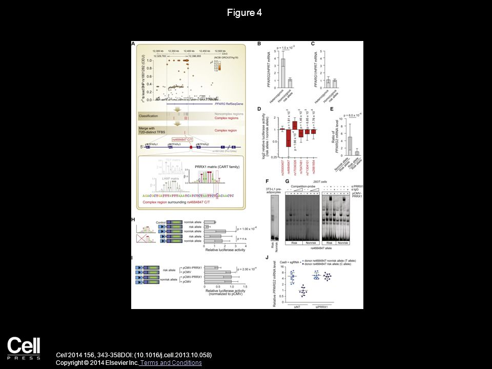 Figure 4 Cell 2014 156, 343-358DOI: (10.1016/j.cell.2013.10.058) Copyright © 2014 Elsevier Inc. Terms and Conditions Terms and Conditions