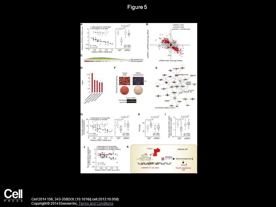 Figure 5 Cell 2014 156, 343-358DOI: (10.1016/j.cell.2013.10.058) Copyright © 2014 Elsevier Inc.