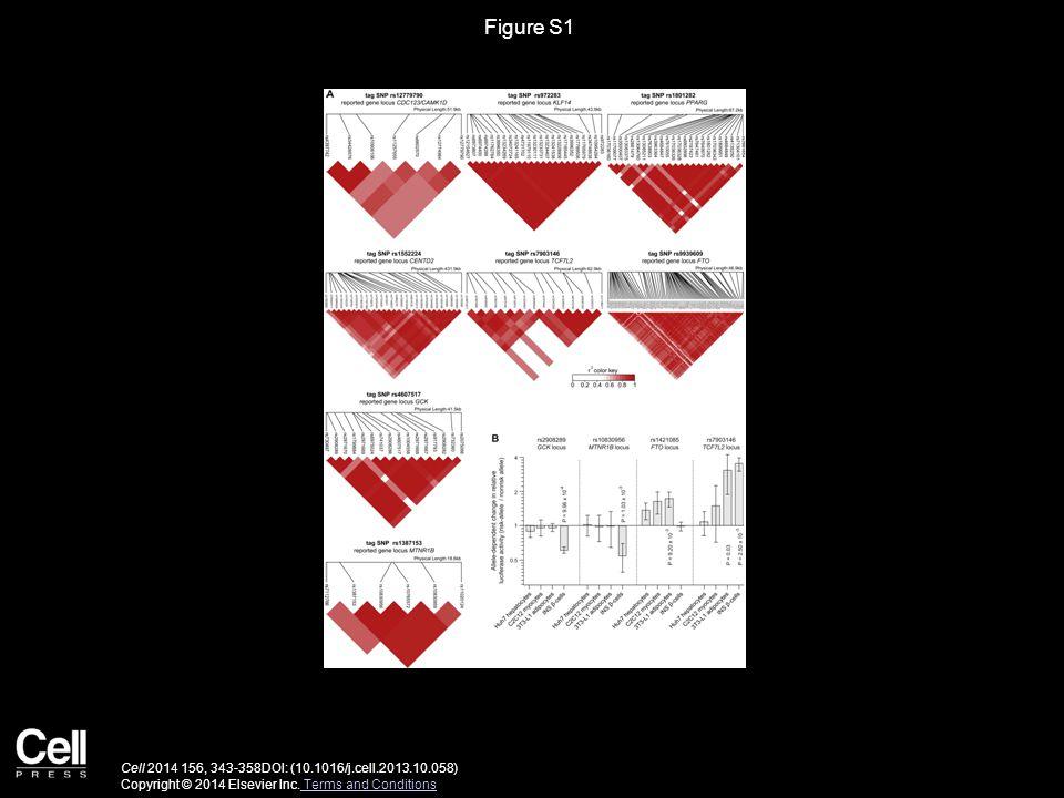 Figure S1 Cell 2014 156, 343-358DOI: (10.1016/j.cell.2013.10.058) Copyright © 2014 Elsevier Inc. Terms and Conditions Terms and Conditions