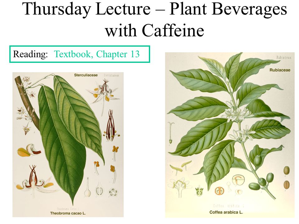 Thursday Lecture – Plant Beverages with Caffeine Reading: Textbook, Chapter 13