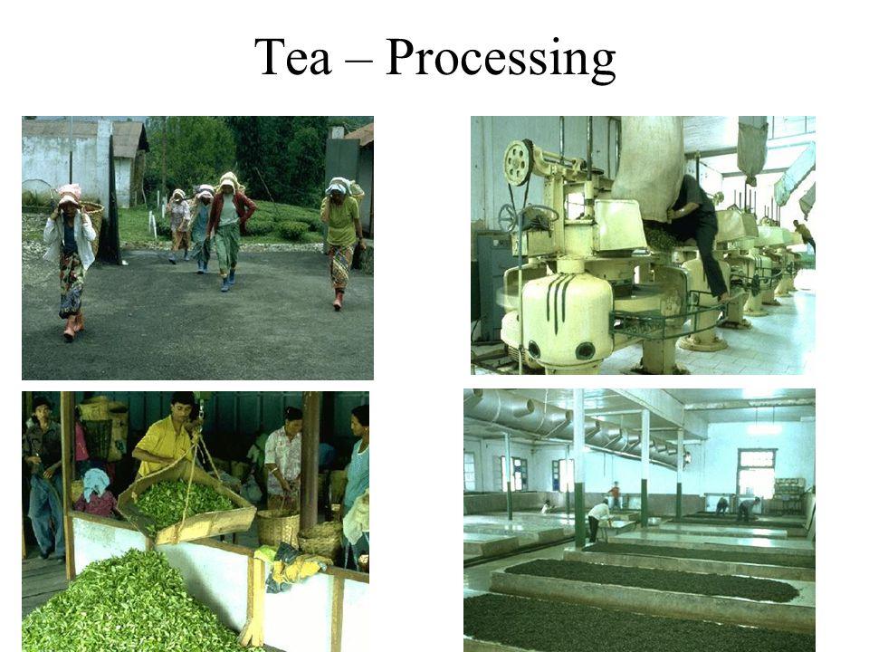 Tea – Processing