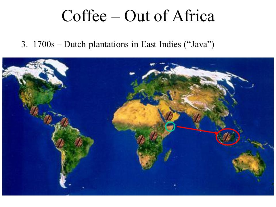 "Coffee – Out of Africa 3. 1700s – Dutch plantations in East Indies (""Java"")"