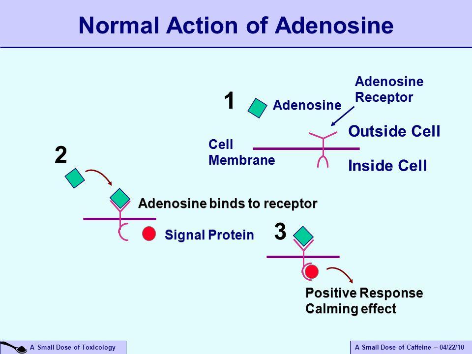 A Small Dose of ToxicologyA Small Dose of Caffeine – 04/22/10 Adenosine Receptor Adenosine Cell Membrane Signal Protein Positive Response Calming effect Positive Response Calming effect Outside Cell Inside Cell Adenosine binds to receptor 11 33 22 Normal Action of Adenosine
