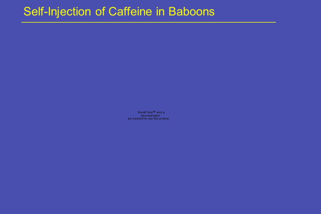 Self-Injection of Caffeine in Baboons