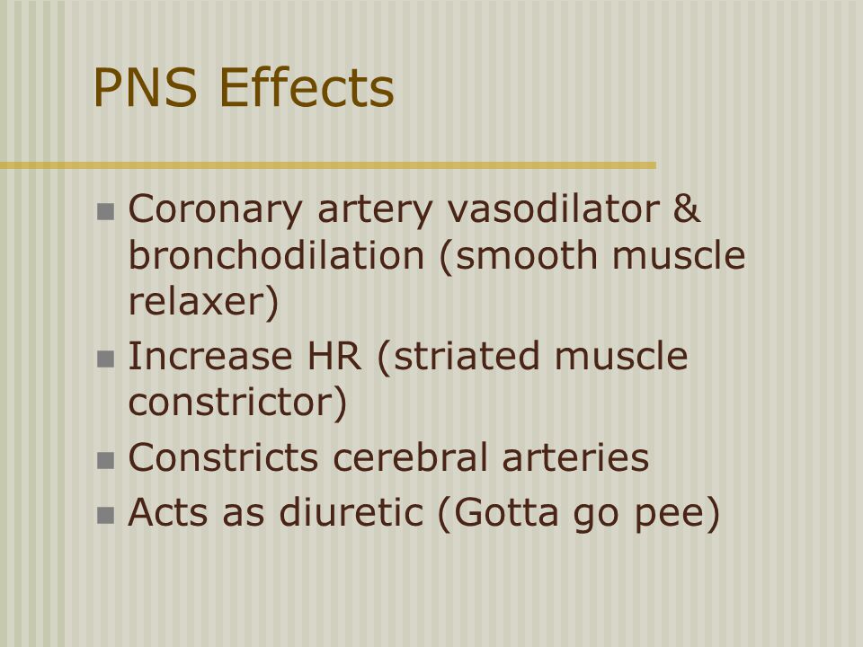 PNS Effects Coronary artery vasodilator & bronchodilation (smooth muscle relaxer) Increase HR (striated muscle constrictor) Constricts cerebral arteries Acts as diuretic (Gotta go pee)