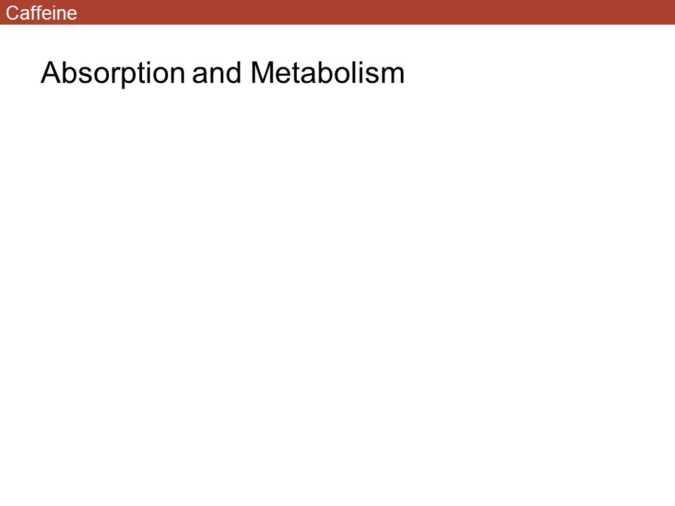 Absorption and Metabolism Caffeine