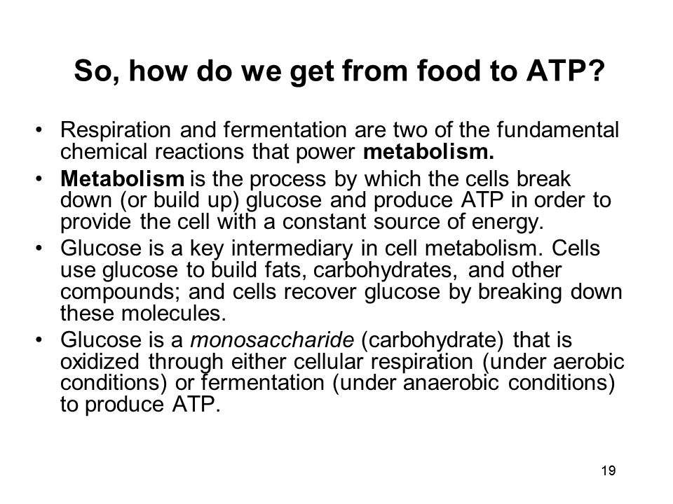19 So, how do we get from food to ATP.