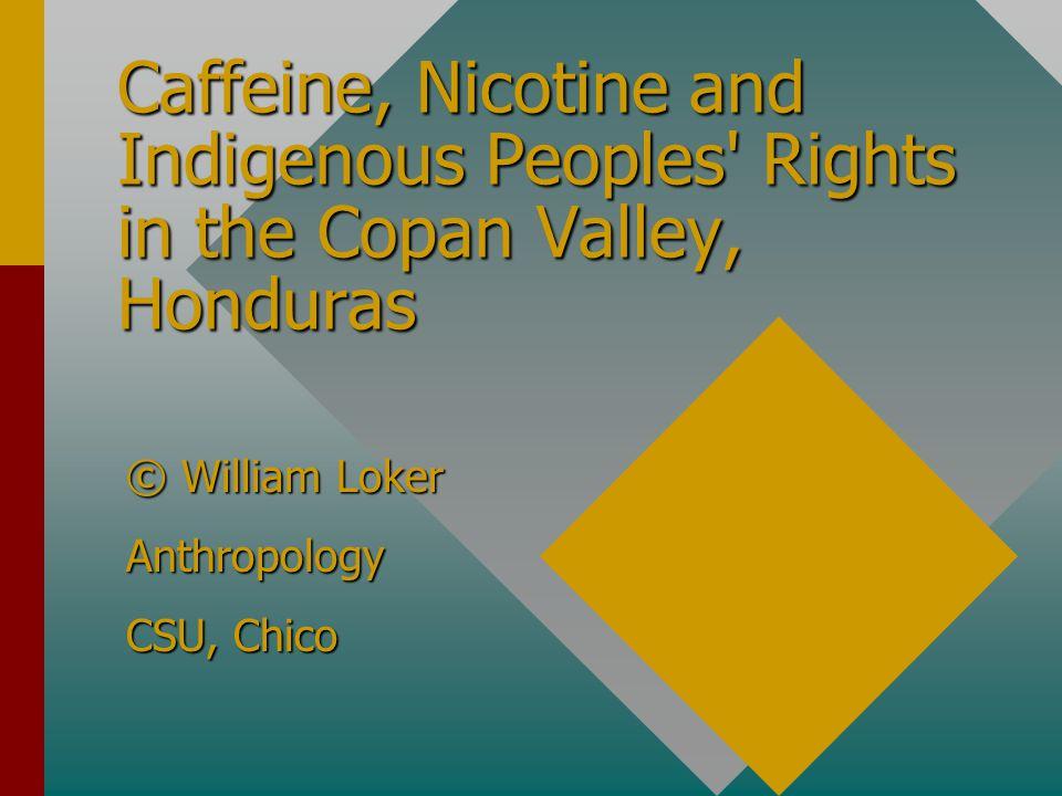 Organic Coffee: certification, production, marketing