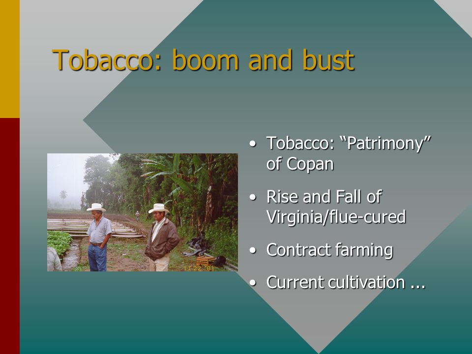 "Tobacco: boom and bust Tobacco: ""Patrimony"" of Copan Rise and Fall of Virginia/flue-cured Contract farming Current cultivation..."