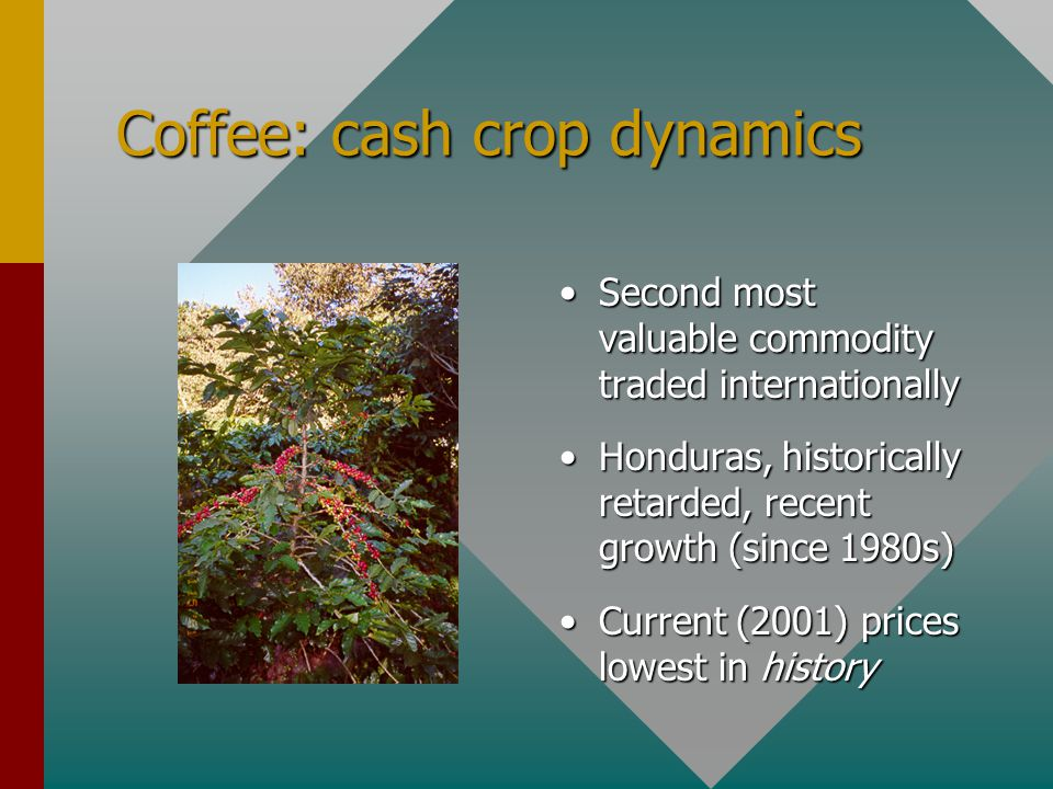 Coffee: cash crop dynamics Second most valuable commodity traded internationally Honduras, historically retarded, recent growth (since 1980s) Current (2001) prices lowest in history