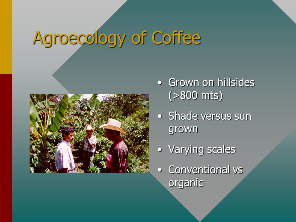 Agroecology of Coffee Grown on hillsides (>800 mts) Shade versus sun grown Varying scales Conventional vs organic