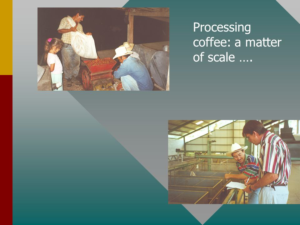 Processing coffee: a matter of scale ….