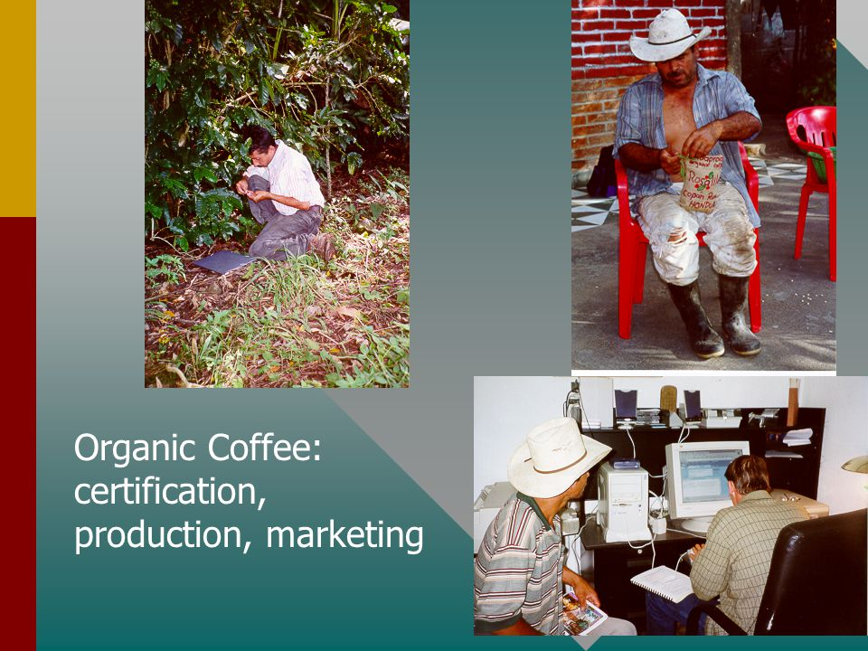 Organic Coffee: certification, production, marketing