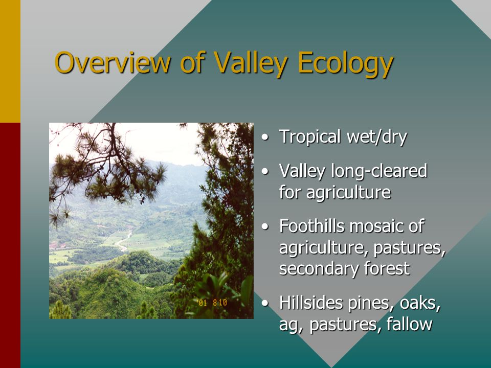 Overview of Valley Ecology Tropical wet/dry Valley long-cleared for agriculture Foothills mosaic of agriculture, pastures, secondary forest Hillsides pines, oaks, ag, pastures, fallow