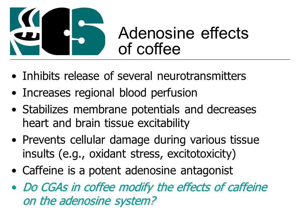 Inhibits release of several neurotransmitters Increases regional blood perfusion Stabilizes membrane potentials and decreases heart and brain tissue excitability Prevents cellular damage during various tissue insults (e.g., oxidant stress, excitotoxicity) Caffeine is a potent adenosine antagonist Do CGAs in coffee modify the effects of caffeine on the adenosine system Do CGAs in coffee modify the effects of caffeine on the adenosine system.