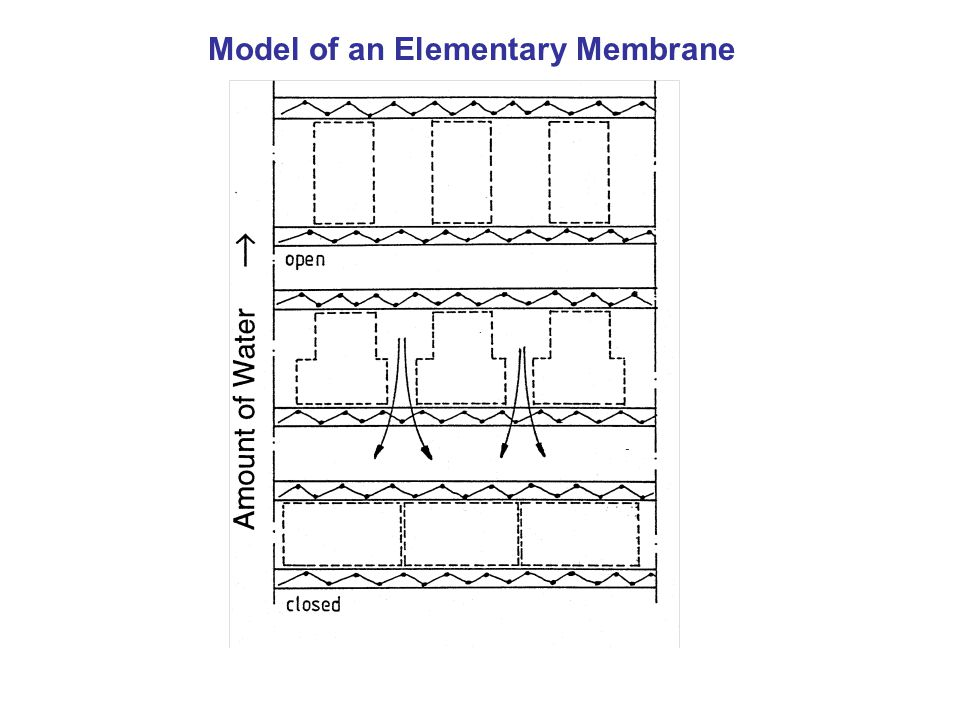 Model of an Elementary Membrane
