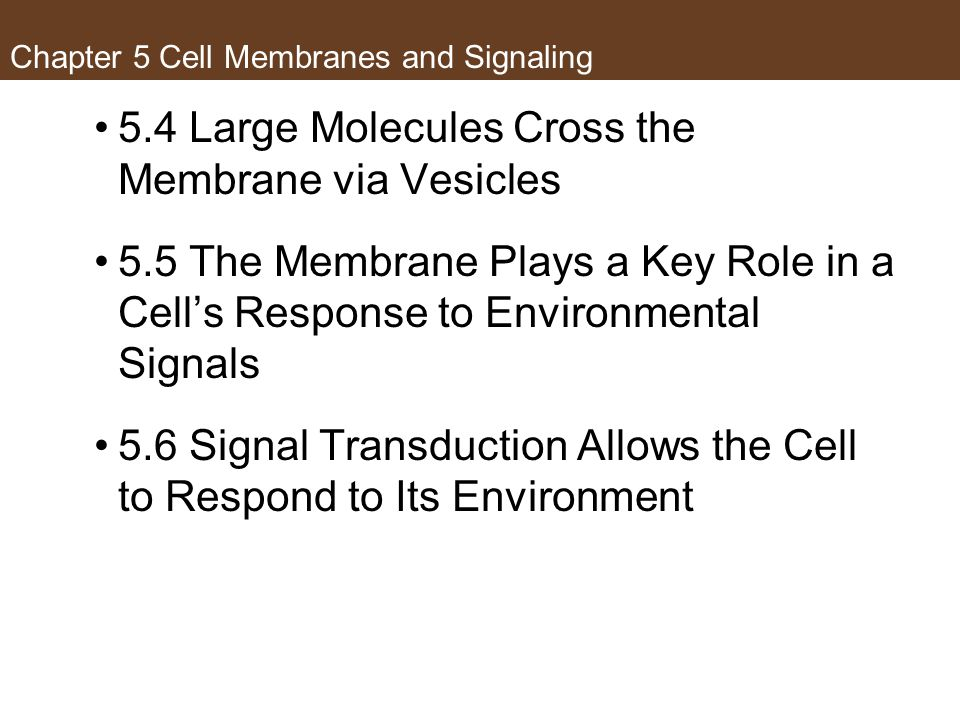 Chapter 5 Cell Membranes and Signaling 5.4 Large Molecules Cross the Membrane via Vesicles 5.5 The Membrane Plays a Key Role in a Cell's Response to E