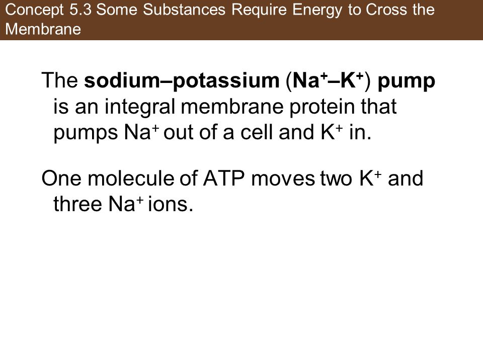 Concept 5.3 Some Substances Require Energy to Cross the Membrane The sodium–potassium (Na + –K + ) pump is an integral membrane protein that pumps Na