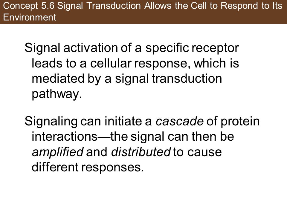 Concept 5.6 Signal Transduction Allows the Cell to Respond to Its Environment Signal activation of a specific receptor leads to a cellular response, w